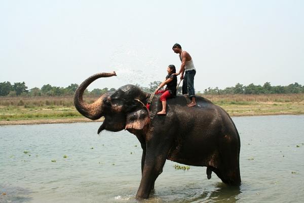 Самый сексуальный слон